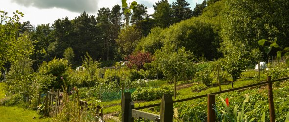 Chinley Allotments